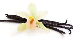 Réutiliser les gousses de vanille
